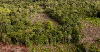 En 2020, plus de 4 millions d'hectares de forêt vierge tropicale ont disparu