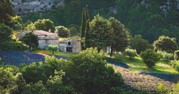 Lifestyle : La Provence est à l'honneur dans ce livre qui sent bon l'été et la lavande