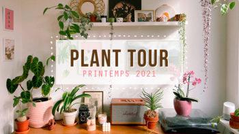 PLANT TOUR 2021 – Ma collection de plantes d'intérieur