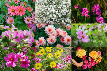 5 fleurs à cultiver en pot pour des bouquets maison