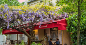 À Montmartre, la mairie tronçonne une glycine centenaire et s'attire les foudres des habitants du quartier